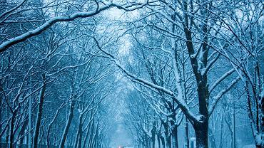 Jaka będzie zima 2018? Będzie zimno, ale zabraknie śniegu