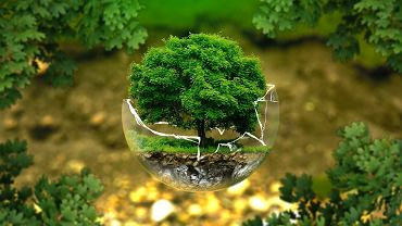 Jak dbać o środowisko? Sprawdź najlepsze sposoby. Zdjęcie ilustracyjne