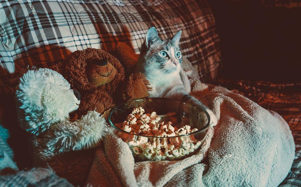 Jaki film na wieczór wybrać? Warto sięgnąć chociażby po produkcje dokumentalne
