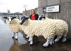 Brytyjscy weganie w pół roku oszczędzili życie 3,6 miliona zwierząt. Czas na veganuary