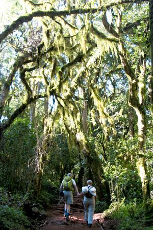 Podróże - jak zdobyć Kilimandżaro, podróże, afryka, Pierwsze godziny - droga  przez tropikalny las