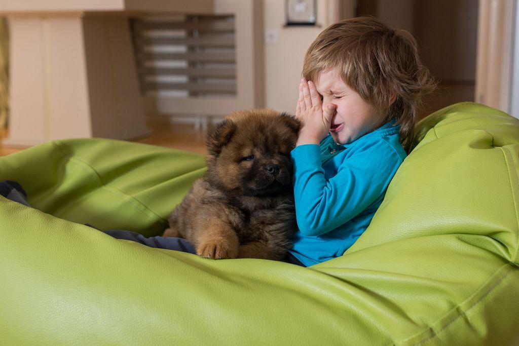 Mieszkanie razem z rożnymi zwierzętami na małej powierzchni zwiększa ryzyko alergii