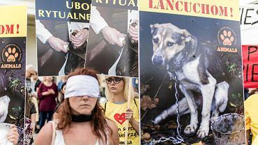 Mimo publicznych obietnic wprowadzenia dobrych zmian w prawie dla zwierząt, w tym zakazu ich chowu na futra, występów cyrków ze zwierzętami, trzymania psów na łańcuchu i uboju rytualnego, politycy wykreślają z projektu ustawy najważniejsze postulaty - informują organizatorzy demonstracji w obronie zwierząt pod Sejmem.