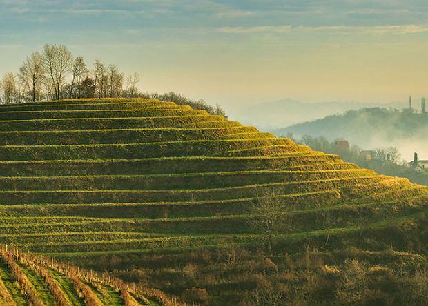 Malownicze chorwackie winnice