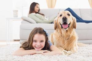 Sierść, kurz i alergeny w Twoim domu? Pomożemy Ci pozbyć się tego problemu.