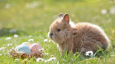 Wielkanoc 2021: za ile dni będziemy obchodzić Wielkanoc? Zdjęcie ilustracyjne