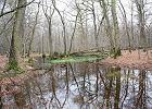 """""""Niemcy mogą wycinać las Hambach i bić ekologów, a nam zabraniają"""". Ile w tym prawdy?"""