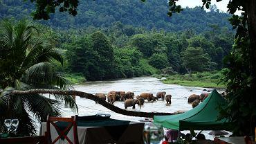 Lunch w towarzystwie słoni? W Pinnawali to codzienność