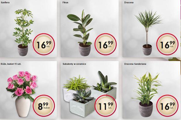 Nowe Kwiaty Doniczkowe Wnetrza Aranzacje Wnetrz Inspiracje Czterykaty Pl