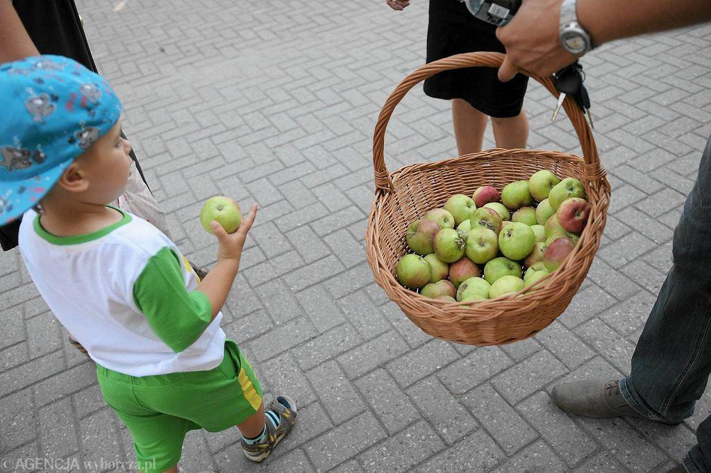 Rozdawanie jabłek w proteście przeciw Putinowi, w związku z embargiem na polskie owoce. Akcja Forum Młodych Ludowców w Olsztynie