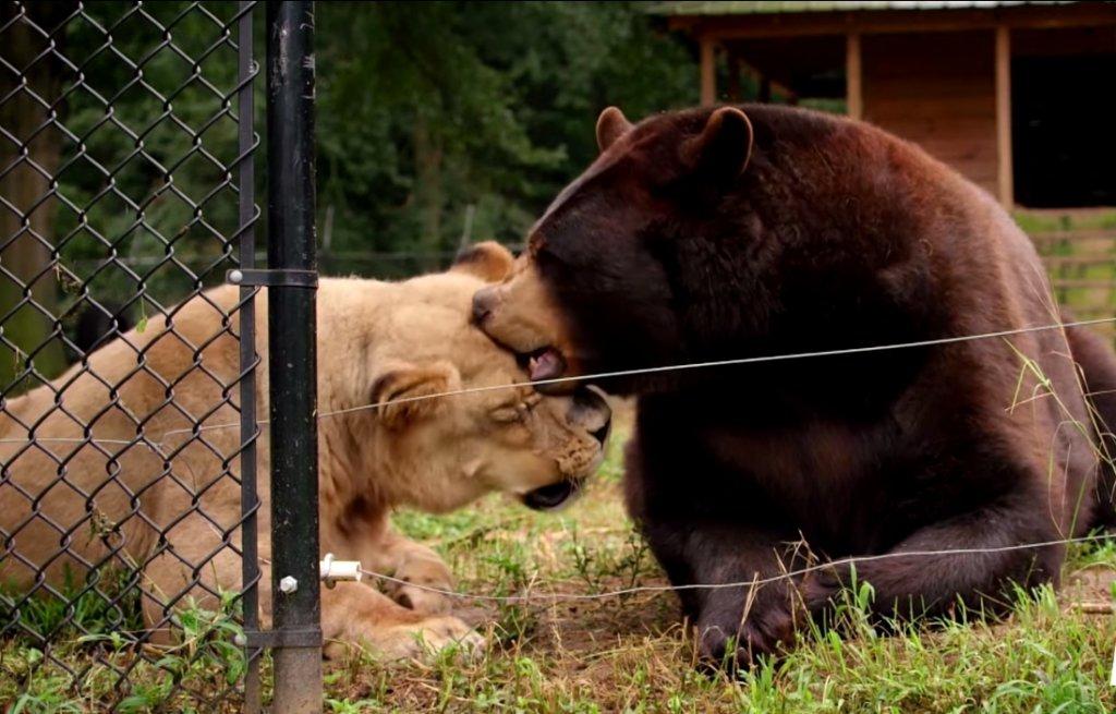 Baloo i Leo