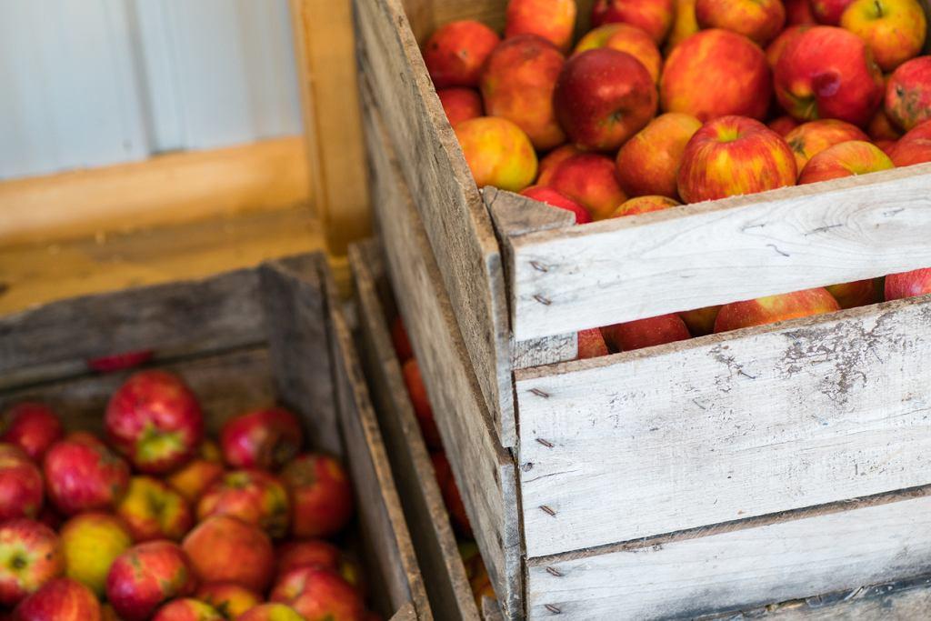 Dlaczego jabłka mają czasem tłustą skórkę i jak to wpływa na nasze zdrowie? Pytamy eksperta