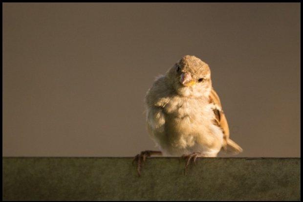 Ranny ptaszek się dziwi, że nie wszyscy mają jak on... / fot. CC0 / fot. www.pexels.com