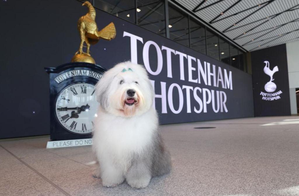 Dulux przeprasza za prześmiewcze wpisy o Tottenhamie. Wytknął mu słabą defensywę i brak trofeów