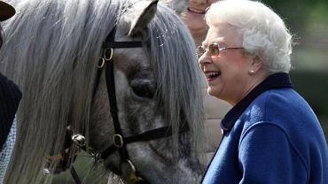 Królowa Elżbieta jeździ konno