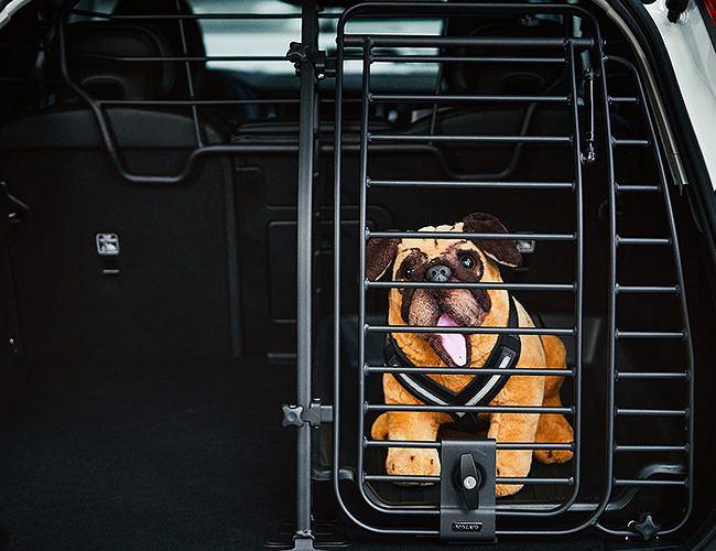 Zabezpieczenie psa w podróży