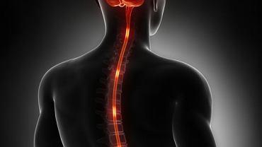 Najważniejszą funkcją worka oponowego jest ochrona rdzenia kręgowego