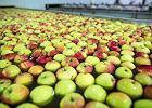 Porażka rządu. Rosyjskie embargo na polską żywność nadal w mocy