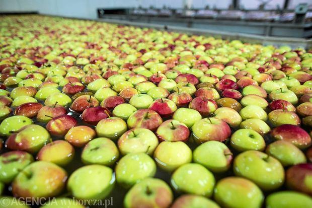 Rosjanie zatrzymali na granicy cztery tony jabłek z Polski. Owoce zniszczyli