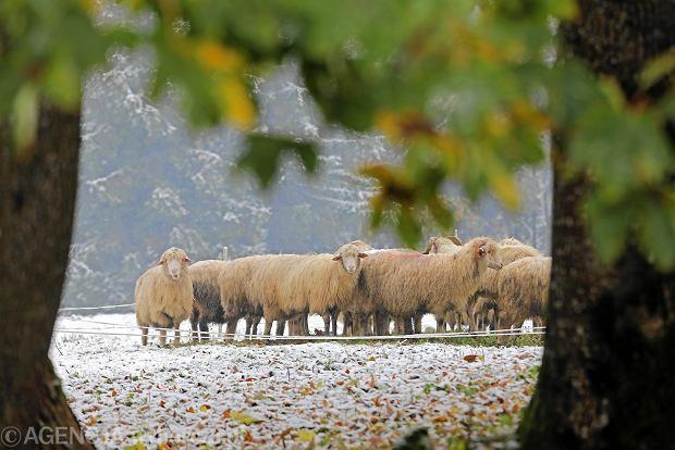 Zdjęcie numer 0 w galerii - Na Podhale wkracza zima. Śnieg w Zakopanem, biało w Tatrach [GALERIA ZDJĘĆ]
