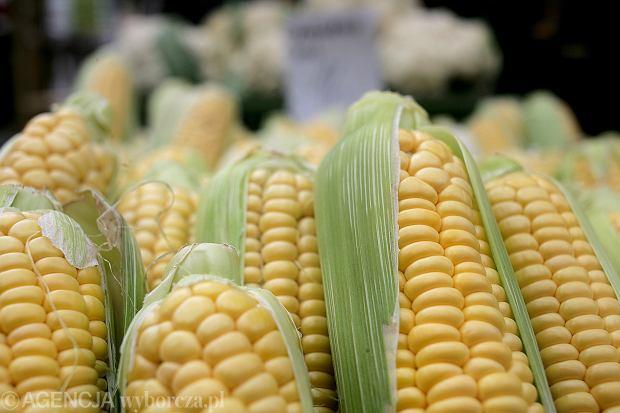 Prawdopodobnie bakteria Listeria monocytogenes znajduje się w mrożonej kukurydzy