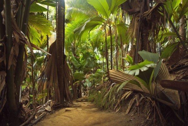 Seszele, las deszczowy/ Fot. Shutterstock