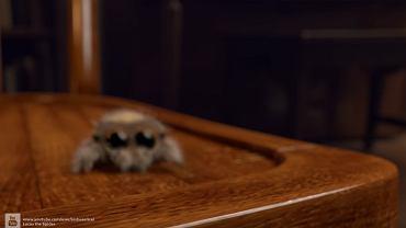 To najsłodszy pająk na świecie.