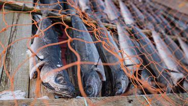 Suszenie łososi, Norwegia