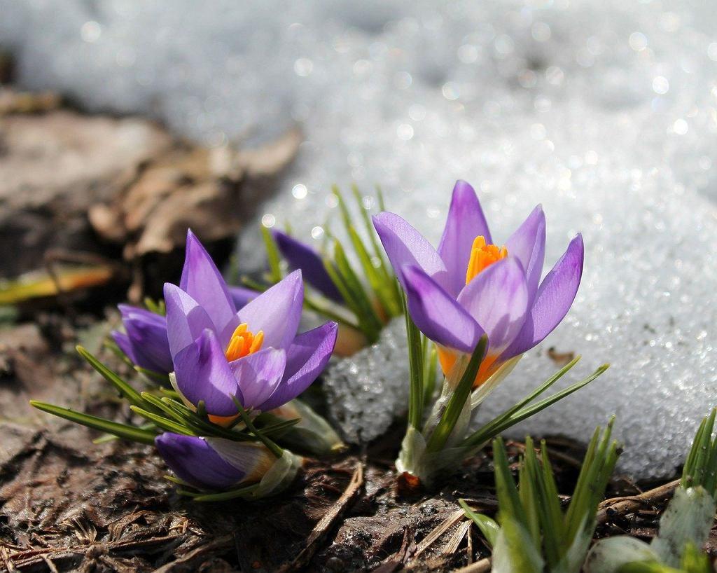 Pierwszy dzień astronomicznej wiosny. Niestety pogoda nie będzie nas rozpieszczać