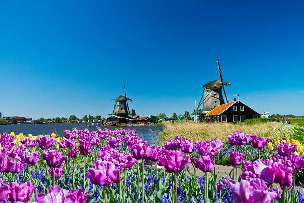 Kinderdijk, Niemcy / fot. Shutterstock