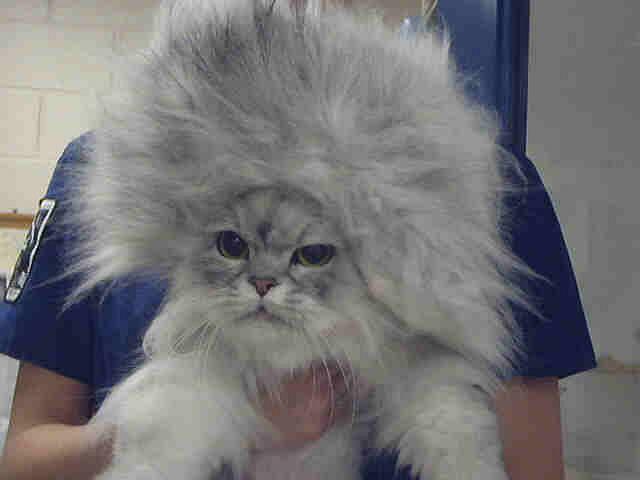 Naelektryzowany kot