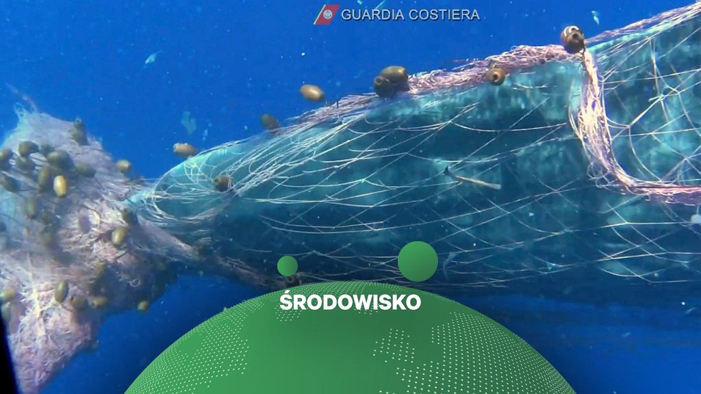 Od kilku dni trwają próby uwolnienia kaszalota, który zaplątał się w sieć rybacką u wybrzeża Sycylii