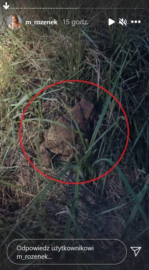 Małgorzata Rozenek napotkała żabę