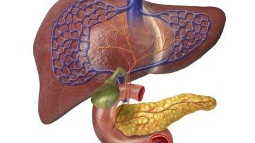 Wątroba, trzustka, woreczek żółciowy, czyli skomplikowana fabryka chemiczna w twoim organizmie