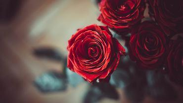 Walentynki 2021. Jakie kwiaty kupić? Z ilu kwiatów powinien składać się bukiet? (zdjęcie ilustracyjne)