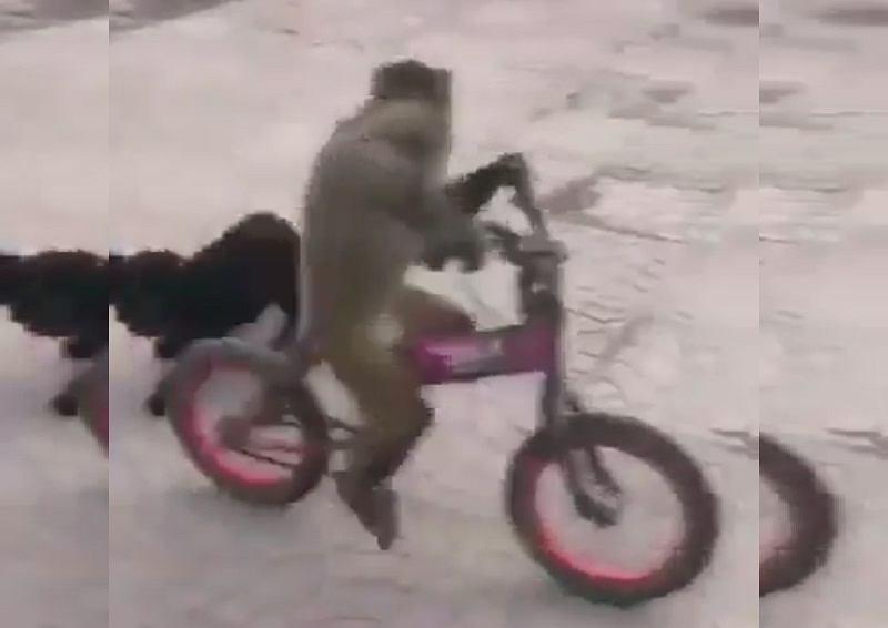 Małpka na rowerze