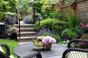 Ciekawe pnącza do ogrodu - zastosowanie, uprawa, przykłady