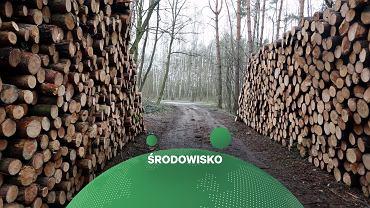 UE pokazała propozycję nowej strategii leśnej. Są głowy krytyki