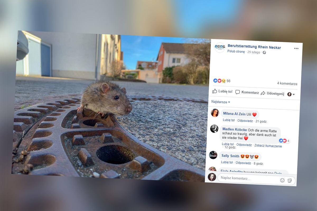 randki z szczurami