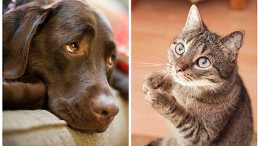 Koty czy psy - ostatnie badanie wskazuje, że na podstawie tego, do których czworonogów pałamy większą sympatią można przewidywać nasze cechy osobowości