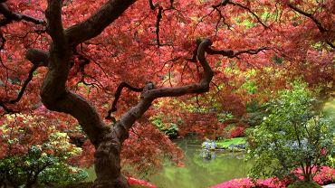 japonia, ogród japoński