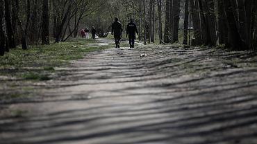 W Lesie Kabackim znaleziono zwłoki kobiety / zdjęcie ilustracyjne