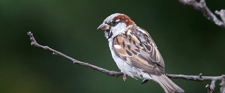 Ameryka Północna w ciągu 50 lat straciła prawie trzy miliardy ptaków