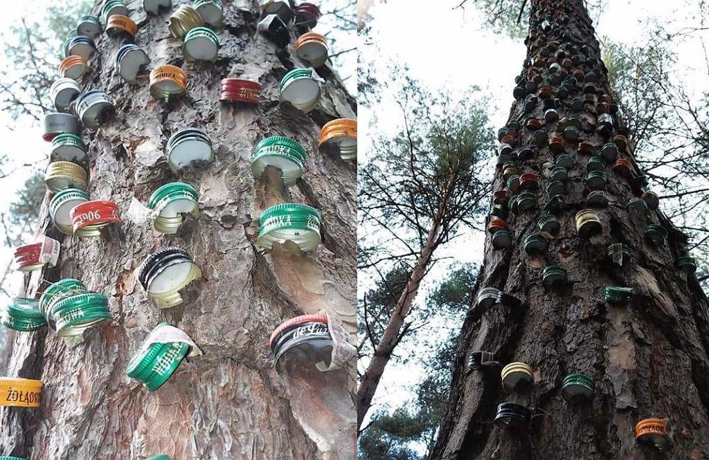 Świętokrzyskie. Wandal okaleczył drzewo. (fot. Piotr Dygas Nadleśnictwo Starachowice)