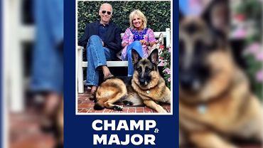 Major - pies Joe Bidena w Białym Domu