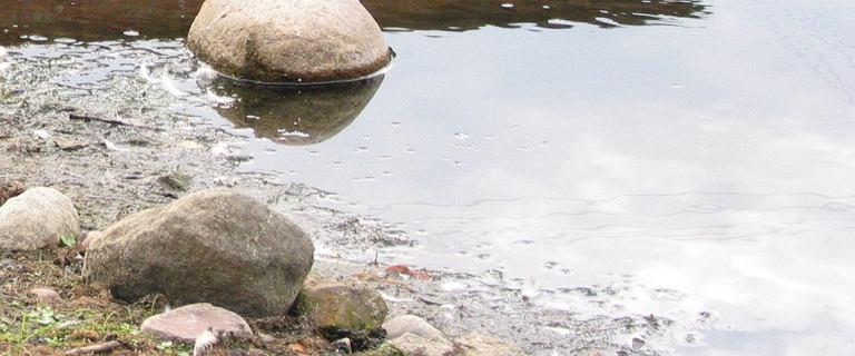 Wielkopolska: 2-latek utopił się w oczku wodnym