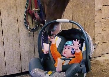Ten maluszek ani trochę nie boi się konia.