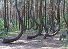 Najdziwniejszy las w Polsce wśród najpopularniejszych na świecie. Jest też inna atrakcja z naszego kraju