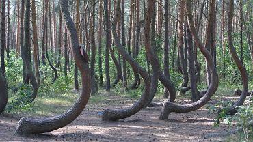 Najdzinwiejszy las w Polsce doceniony za granicą