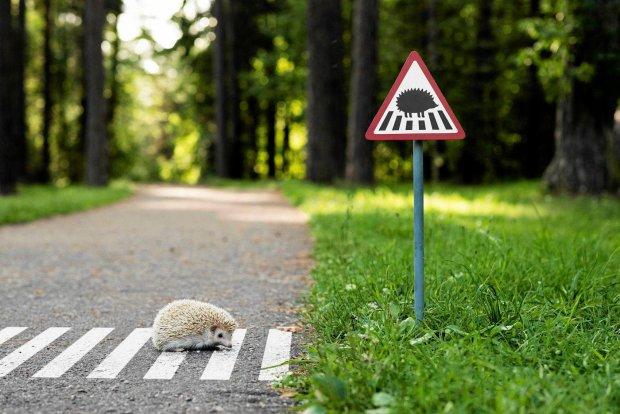 Zdjęcie numer 0 w galerii - Miniaturowe znaki drogowe dla jeży, kaczek i kotów. One żyją w mieście razem z nami